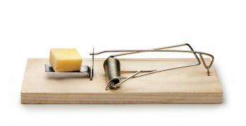 sch dlinge nachhaltige und wirksame m usebek mpfung hukendu ratgeber. Black Bedroom Furniture Sets. Home Design Ideas